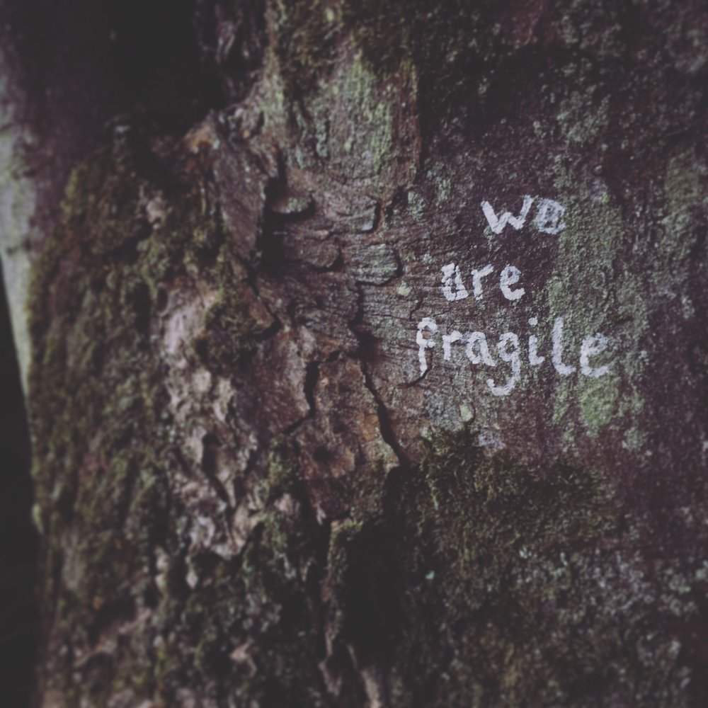 we are fragile.jpeg