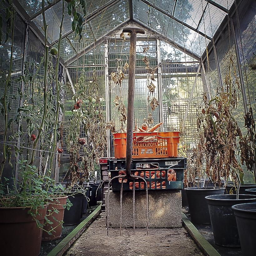 garden forks alicleary.com_6.jpg