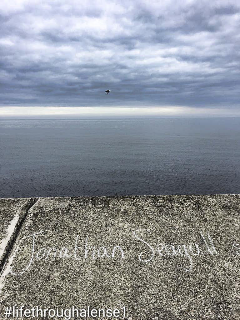 jonathan livingston seagull scarborough July 2018_11.jpg