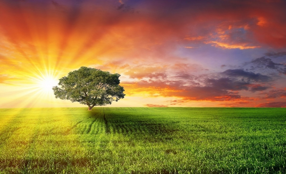 lone-tree-in-a-grass-field-285-1366x768.jpg