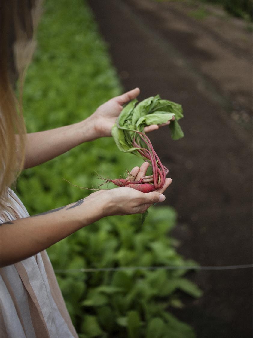 farmTable01 copy.jpg