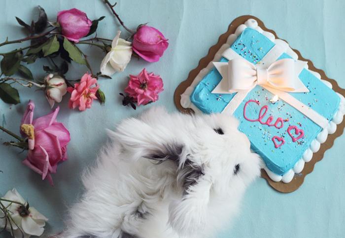 Happy Birthday, Cleo! — The Jewels of New York