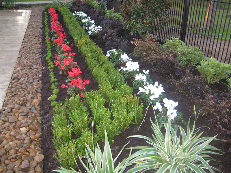 Cyclamen-landsacpe-bed-addition-boxwood-the-woodlands-spring-tomball-houston-design.jpg