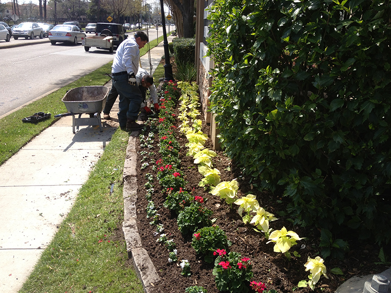 landscape-crews-installing-commercial-color-galleria-houston-memorial-best-landscaper-landscaping-company-repair-irrigation-licensed-stone-luxury-the-woodlands-tx.jpg