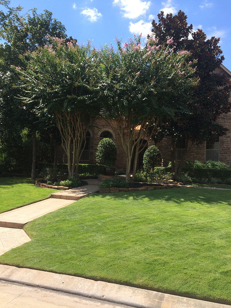 lawn-maintenance-lawn-care-landscape-the-woodlands-best-landscaper-spring-cypress-tomabll-magnolia.jpg