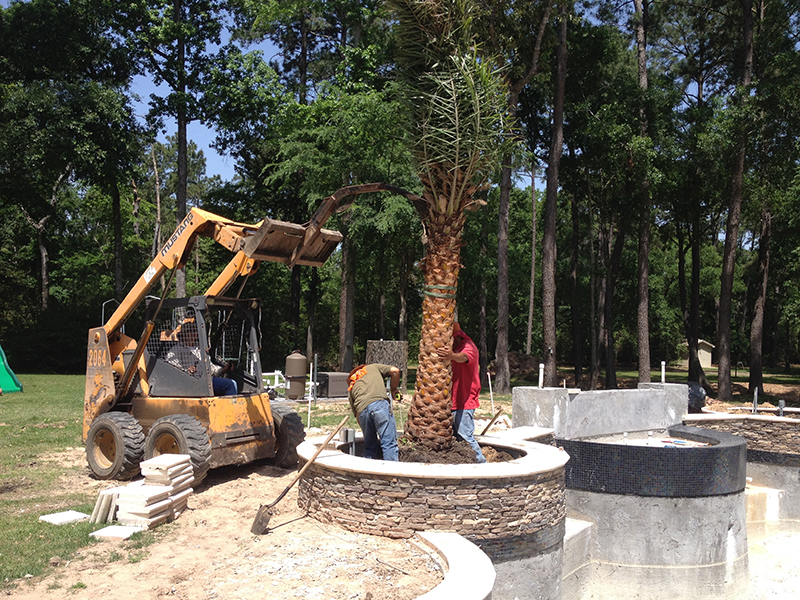 palm-tree-installation-planters-sylvester-pool-the-woodlands-luxury-large-best-landscaper-landscaping-houston-cypress-spring-magnolia-montgomery-design-pool-builder-aggie-envy-exteriors-.jpg