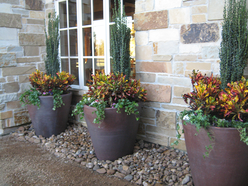 rustic-hill-country-pottery-landsacpe-envy-exteriors-sky-pencil-coleus-courtyard-the-woodlands-spring-houston.jpg