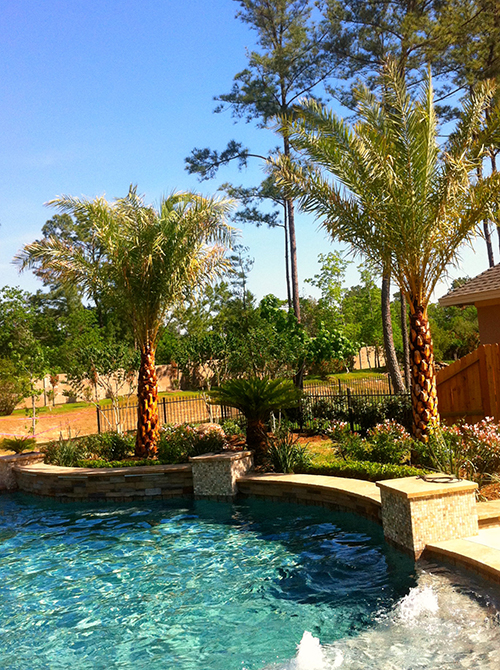 pool-landscape-landsaping-palms-custom-pool-builder-designer-designs-design-build-luxury-top-best-landscaper-new-remodel-landscaping-aggie-the-woodlands-houston-spring-magnolia-conroe-montgomery-cypress.jpg