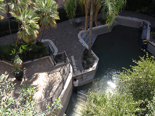 pool-renovation-remodel-construction-new-pavers-pebble-tec-tile-coping-installation-pool-builder-design-build-the-woodlands-houston-spring-commercial-residential-luxury-custom-professional.jpg