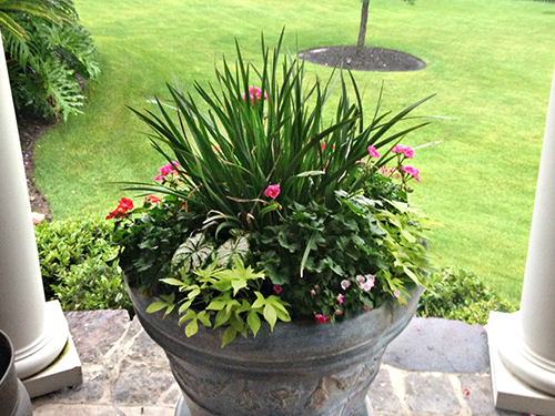 pottery-urn-planter-iris-color-patioo-deck-accents-romantic-install-maintenance-lawn-care-irrigation-sprinklers-the-woodlands-houston-spring-magnolia-conroe-montgomery-cypress.jpg