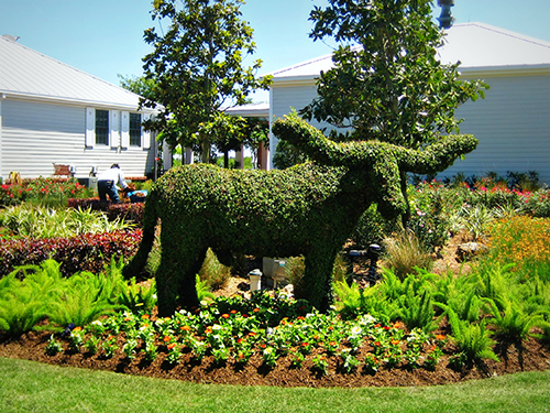 Bevo-longhorn-topiary-cypress-landscape-envy-houston.jpg