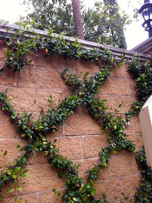 climbing-vines-diamond-trellis-entry-jasmine-the-woodlands-fence-stone-envy-spring.jpg