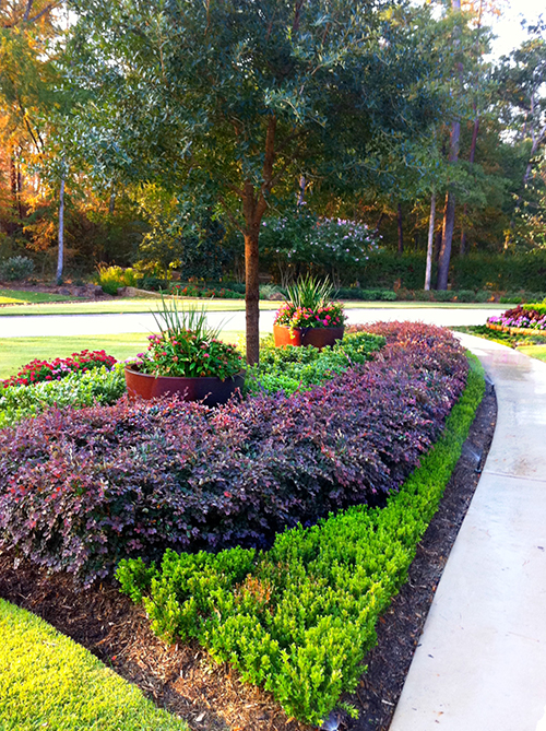 pottery-urns-inside-within-landscape-boxwood-hedge-loropetalum-landscape-the-woodlands-custom-design-envy-houston.jpg