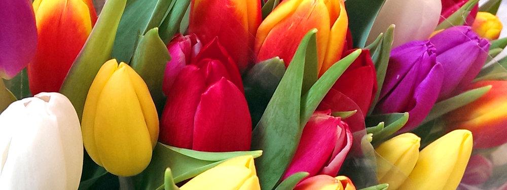 tulips1_640x240.jpg