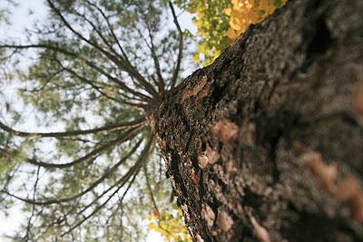 garnett-timberland.jpg