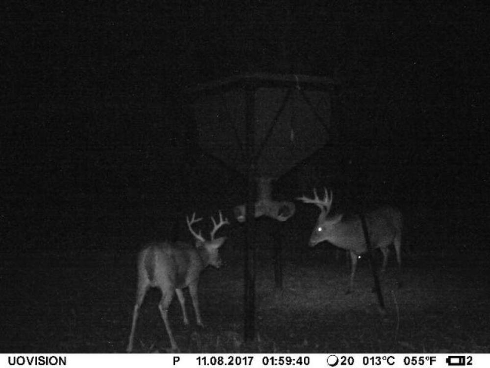 deer5.png