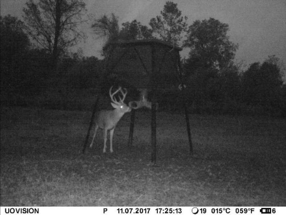 deer9.png