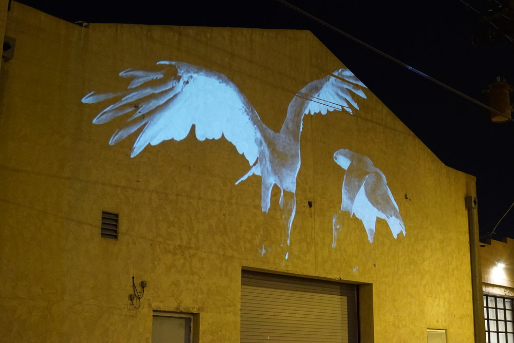 vulture animal projection art ecoart wildlife video conservation ecological animal projection public art