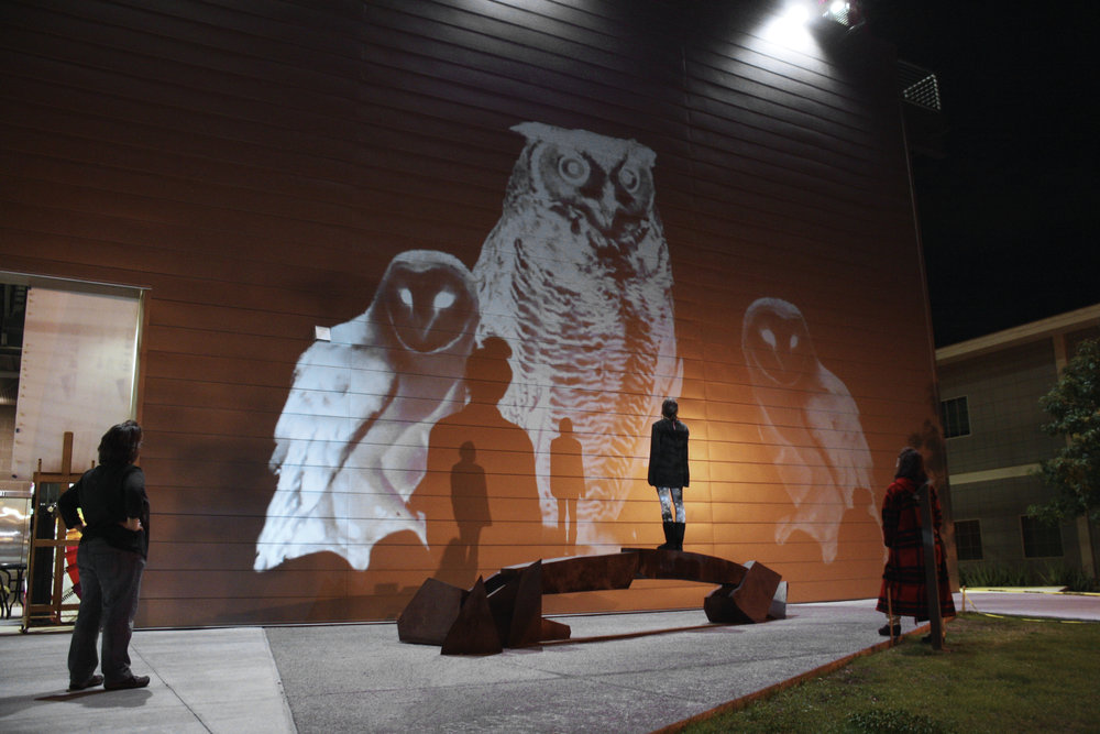 barn owl projection art ecoart wildlife conservation