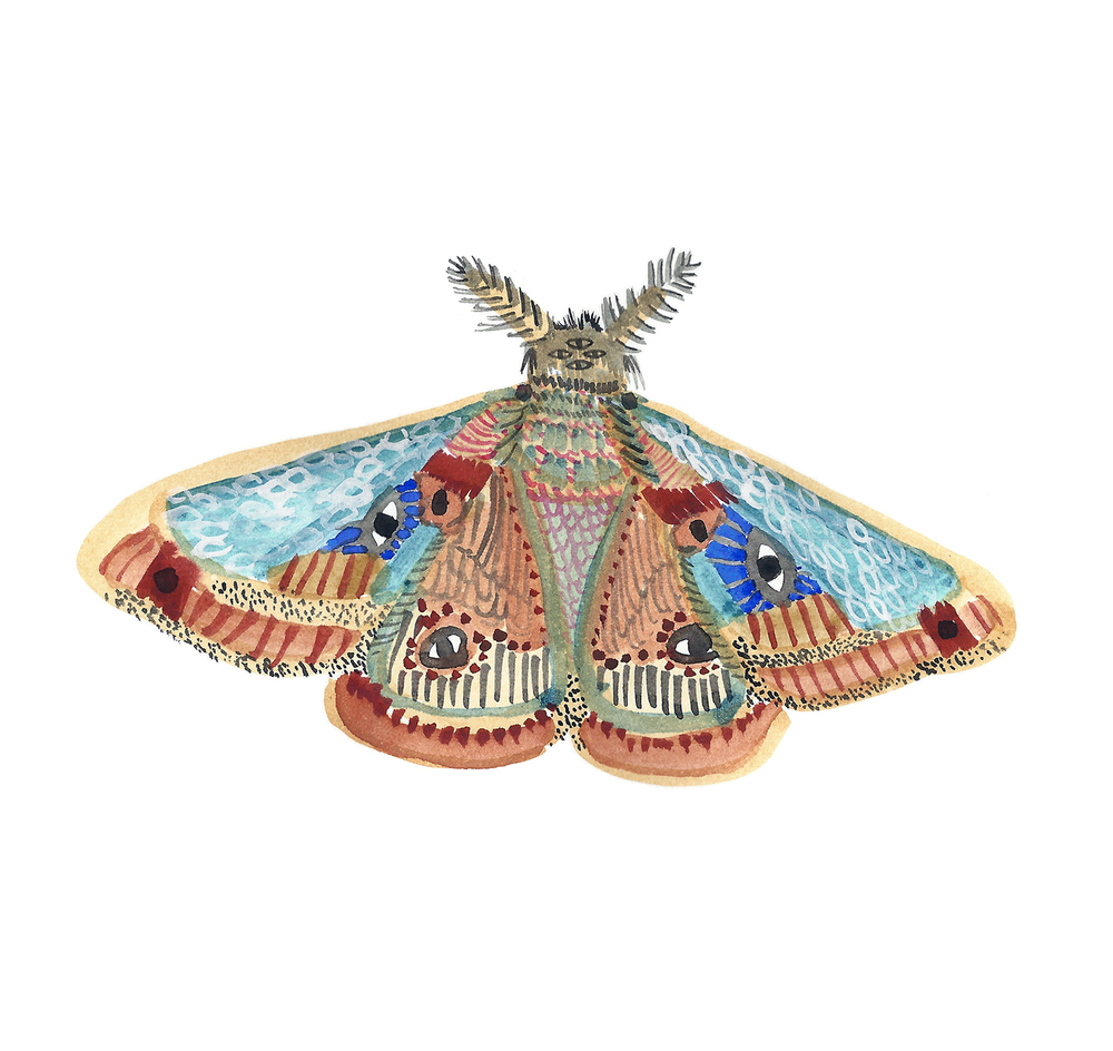 first moth 200dpi.jpg