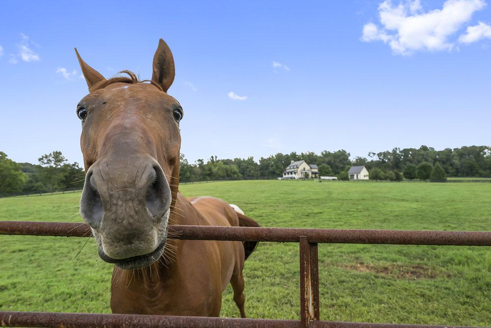 Turn-key horse farm - Currently available!