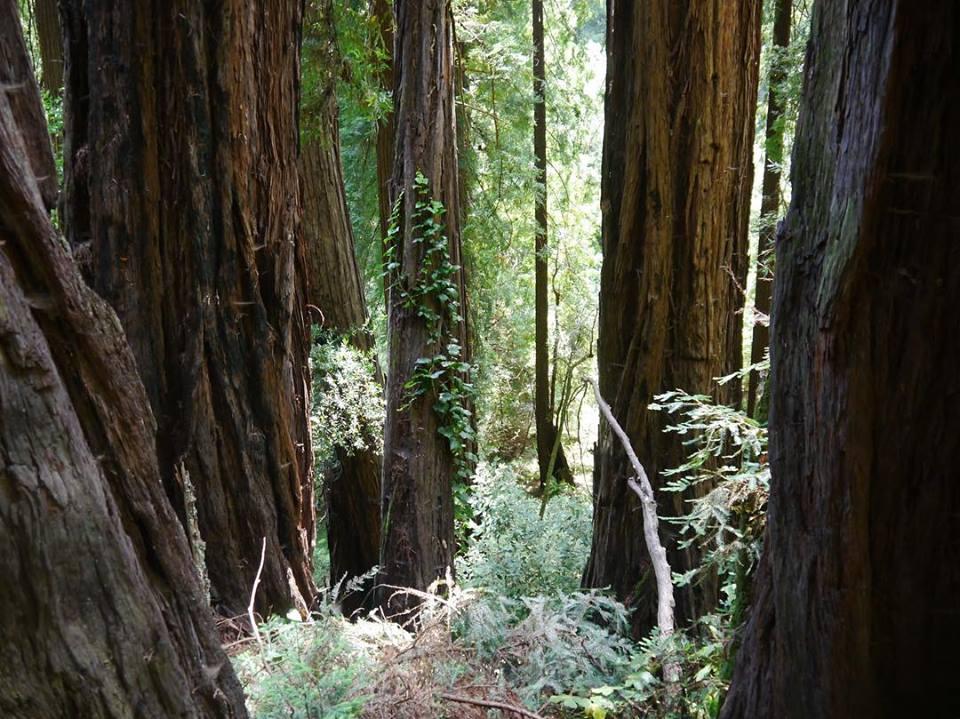 Caitlin_Cimino_Redwoods.jpg