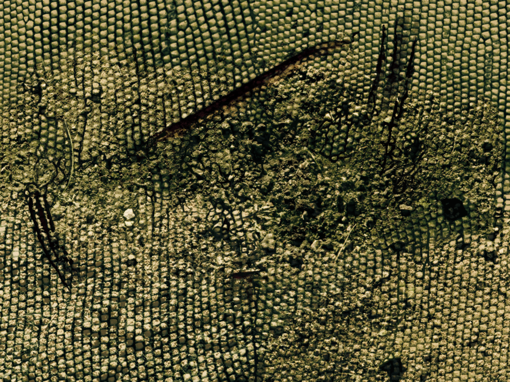 LizardSkin2.png