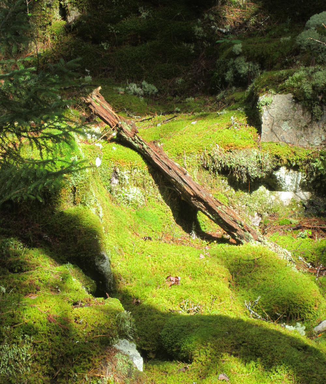 moss& log.jpg