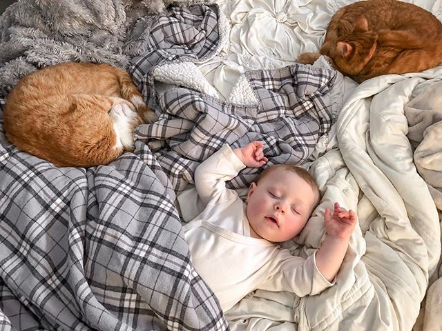 Things these three have in common: nap schedules,  a profound love of cardboard boxes, and spitting up on the floor and not telling anyone about it.