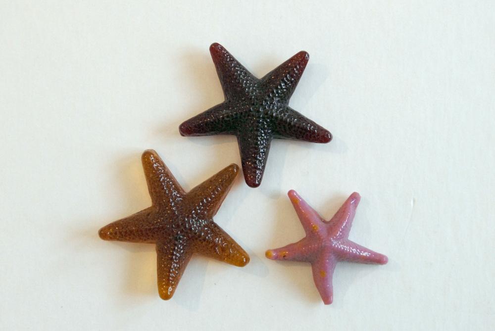 starfish.jpeg