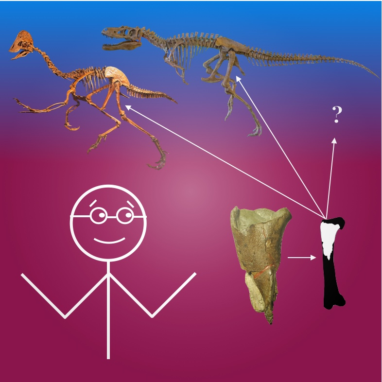 Be a Compensation Paleontologist -
