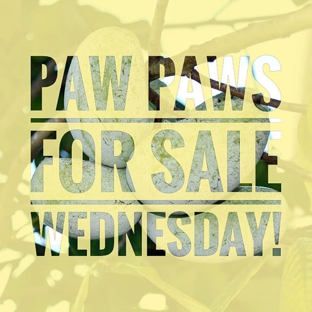 We are going to be selling Pawpaws on Wednesday from 12-4. Stop by the shop if you'd like to grab some. Quantities are limited so get there early. Pawpaws are $7.00 per pound we accept both cash and credit cards.