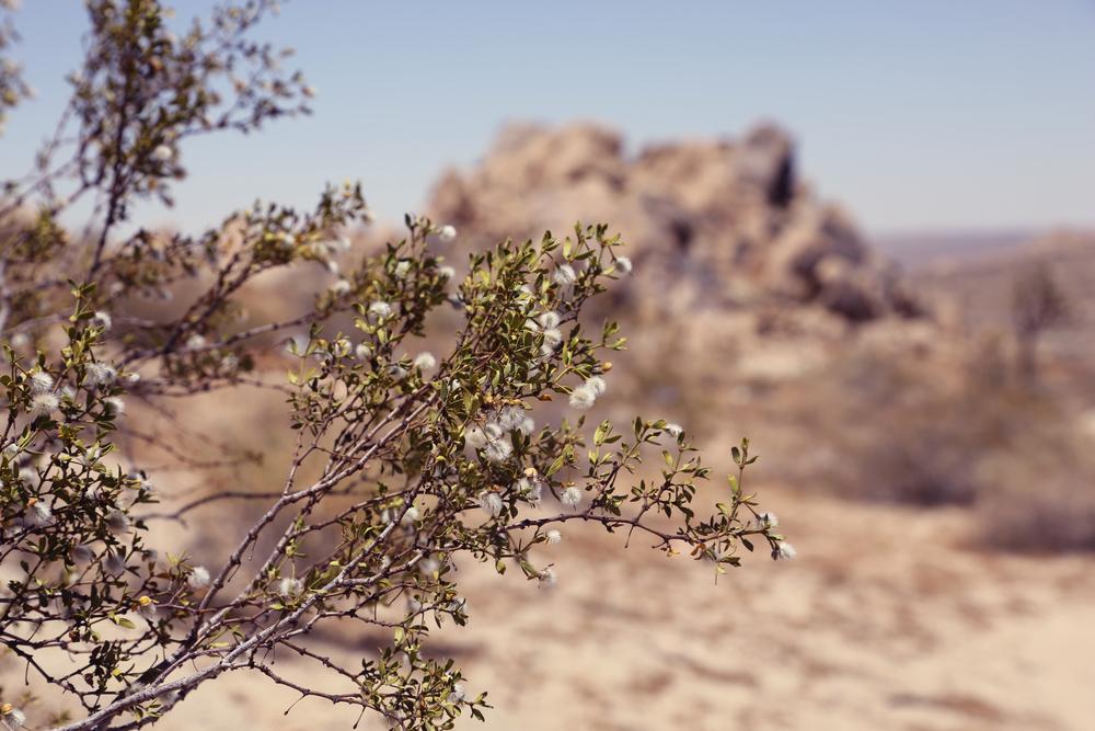 Desert Trees.jpg