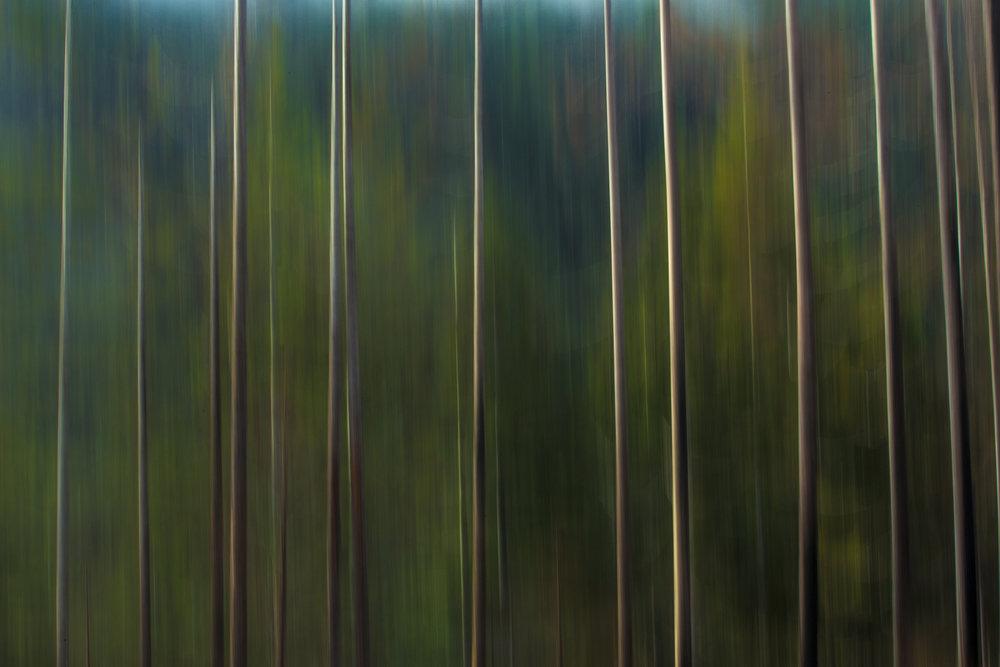 BC_Blurred trees.jpg
