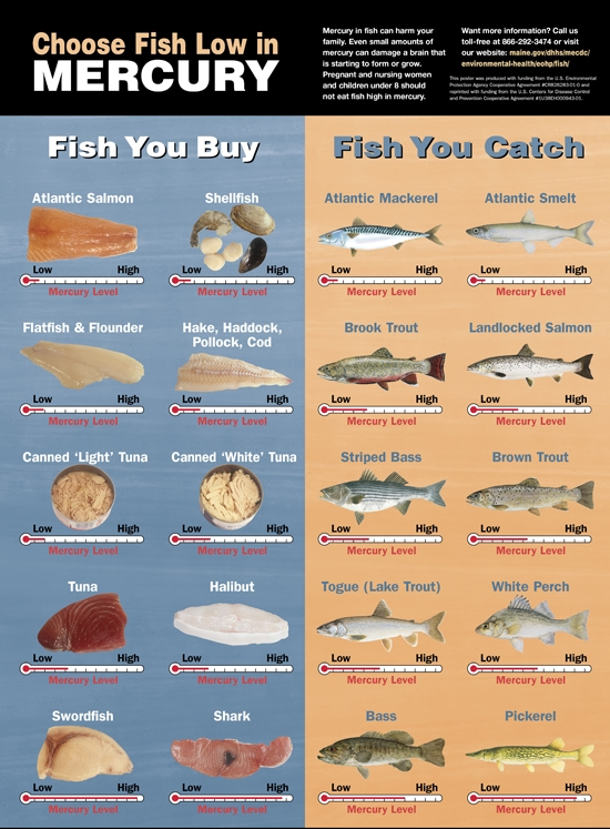 Finding the best fish oils healthyfashionista health for Mercury levels in fish chart