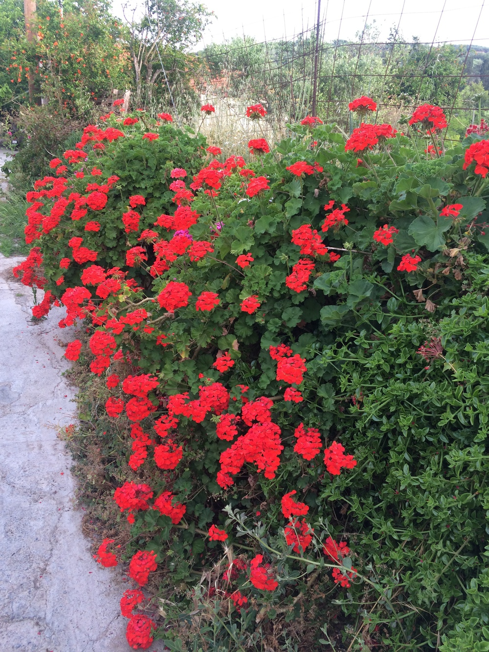 Avdou Village Crete