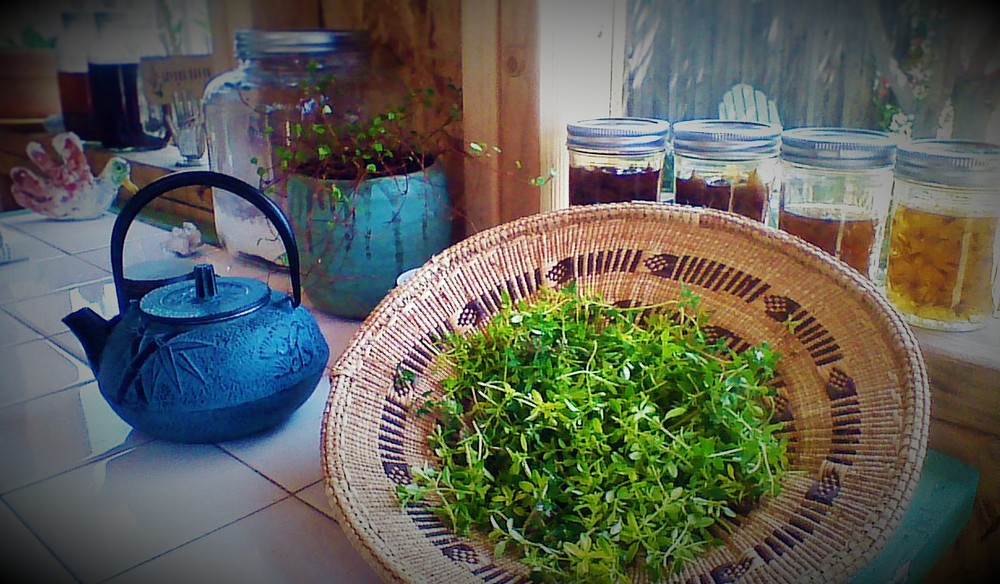 Preparing thyme tincture