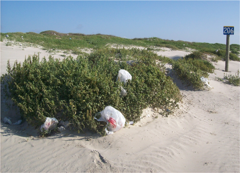 Plastic bags often reside in sand dunes. If you find one, use it to conduct a short beach cleanup!