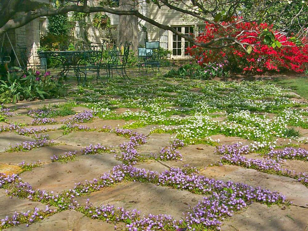 jourdan-way_step-stone-planting.jpg