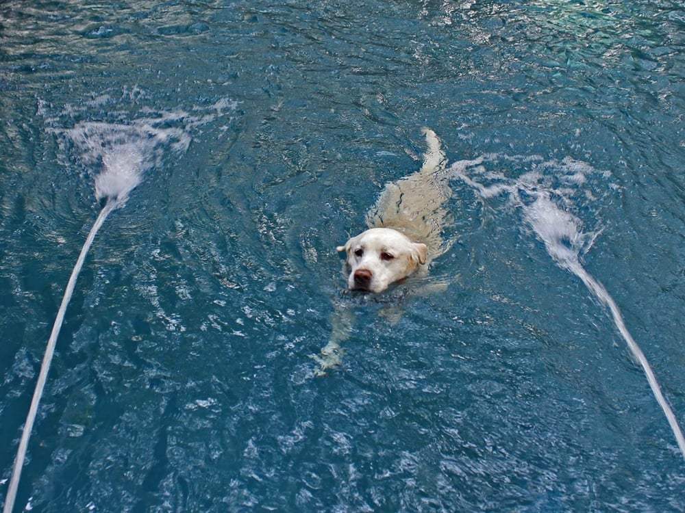 happy dog in swimming pool