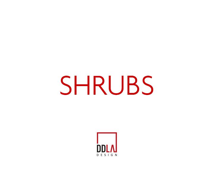 SHRUBS.jpg