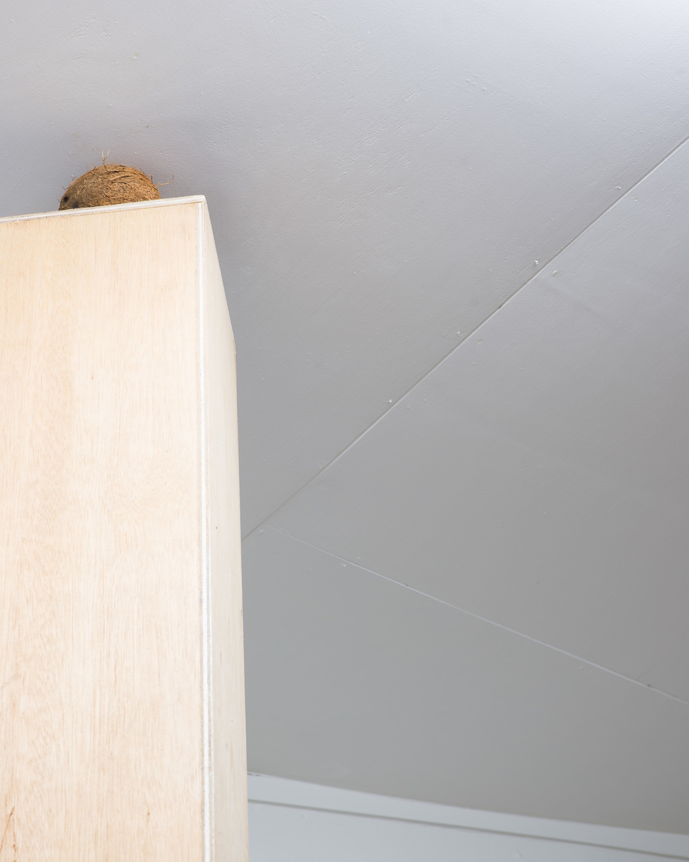 Fijian < Coconut    2015    Coconut, plywood plinth    360 x 25 x 25cm     Enquire