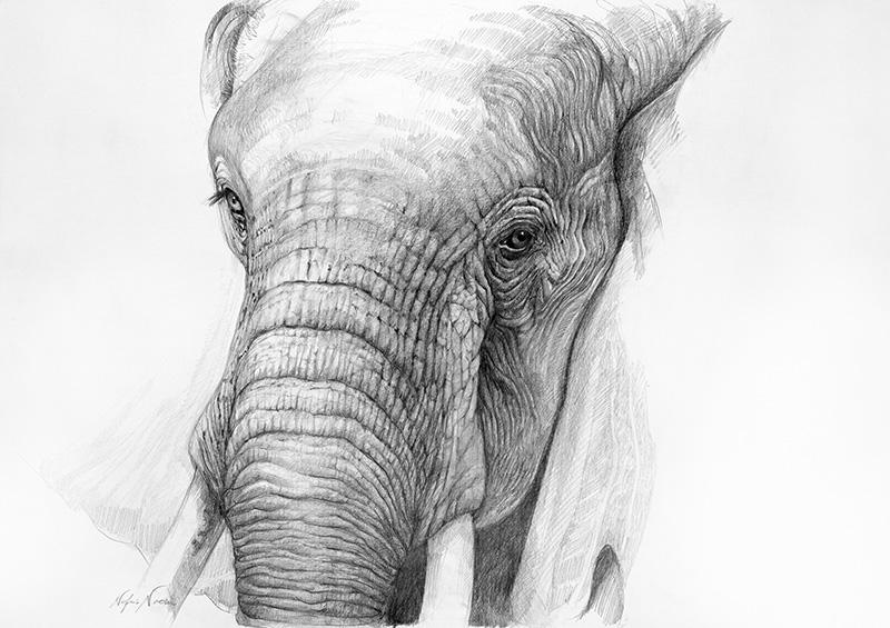 nafissa-elephant-15_0.jpg