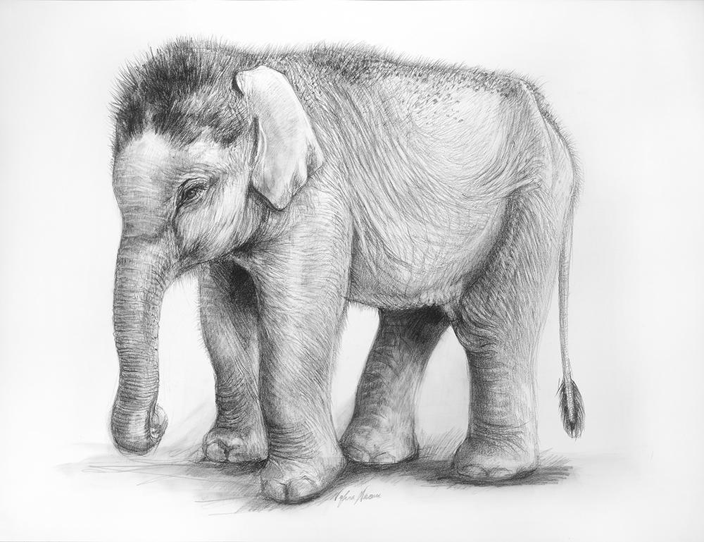 nafisa-elephant-1.jpg
