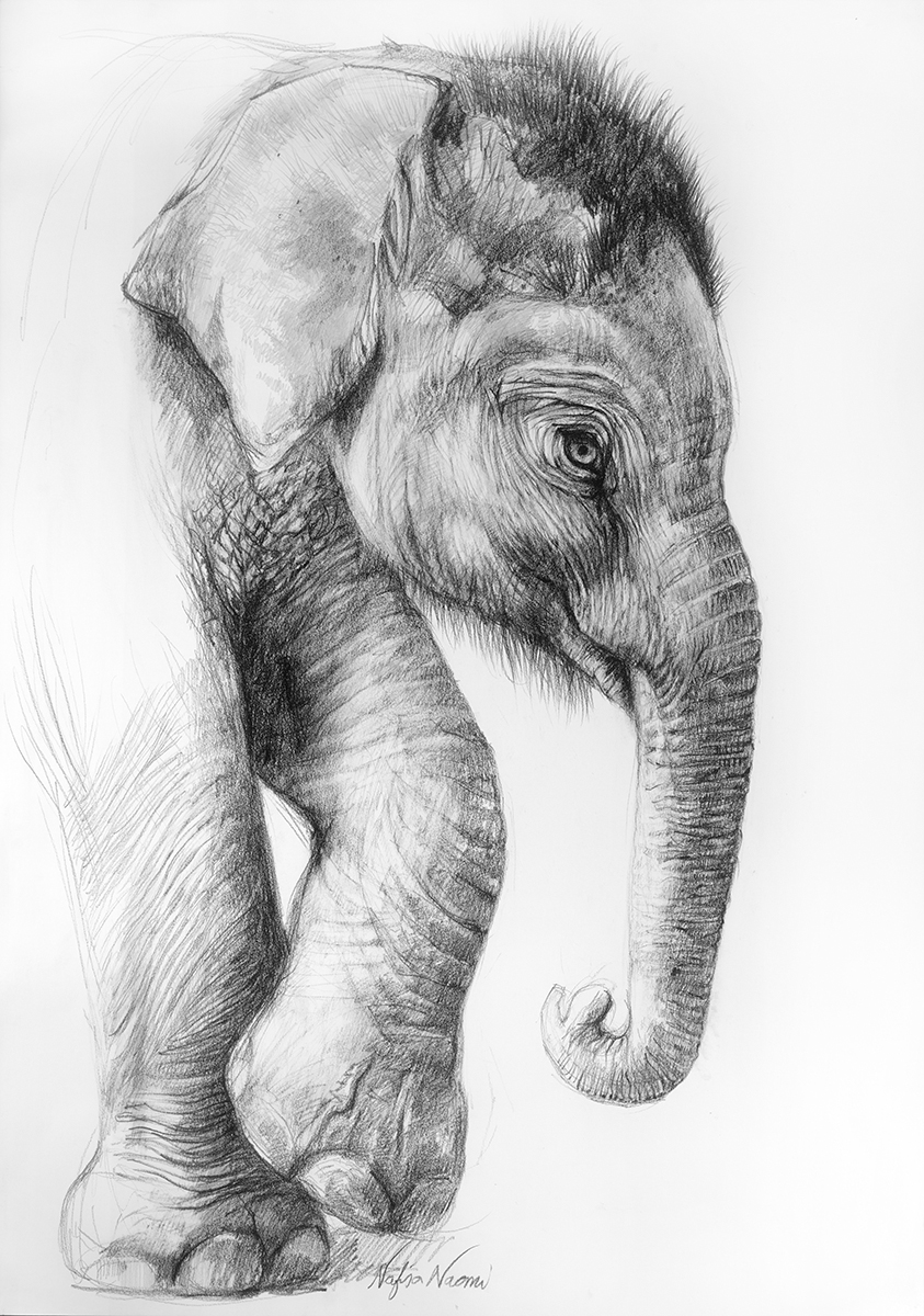 nafisa-elephant-3.jpg
