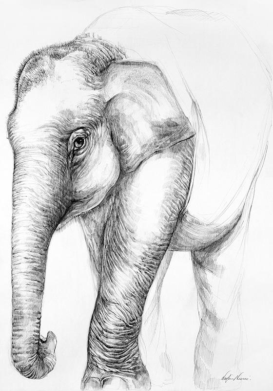 nafissa-elephant-1.jpg
