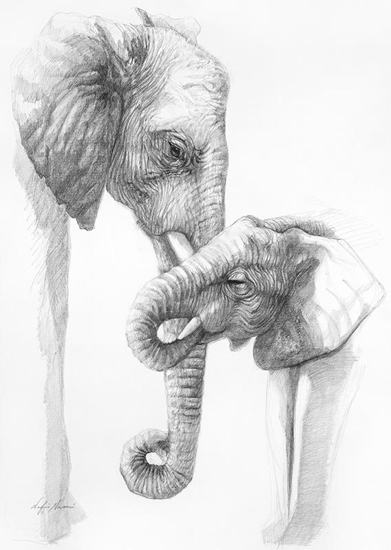 nafissa-elephant-3.jpg
