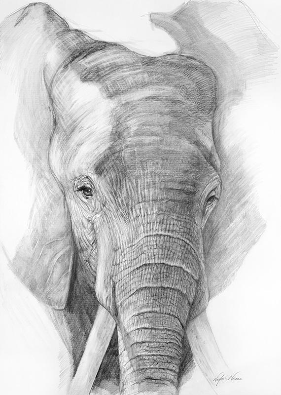 nafissa-elephant-4.jpg