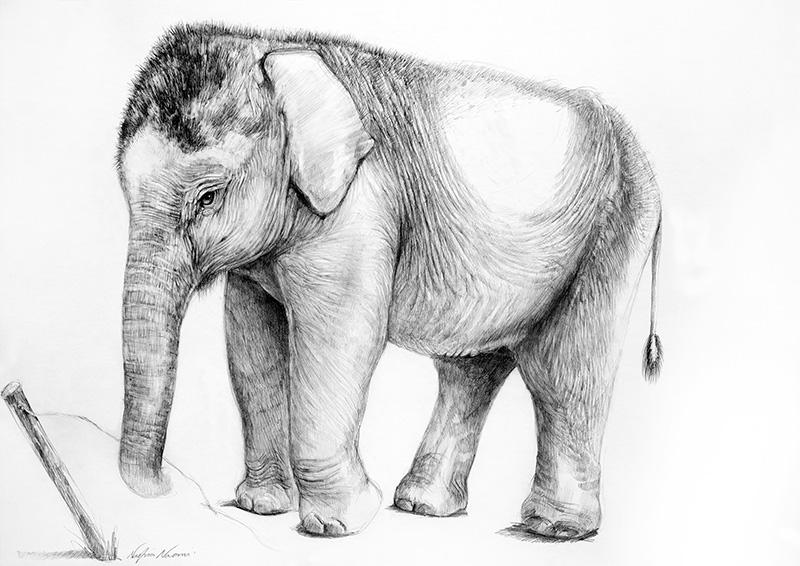 nafissa-elephant-6_0.jpg