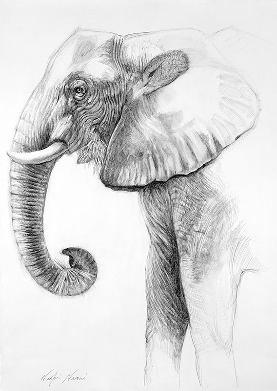 nafissa-elephant-7_0.jpg